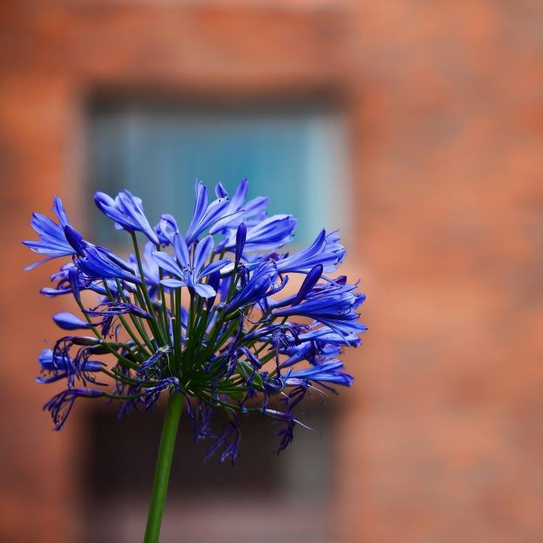 Blue flower on terracotta background